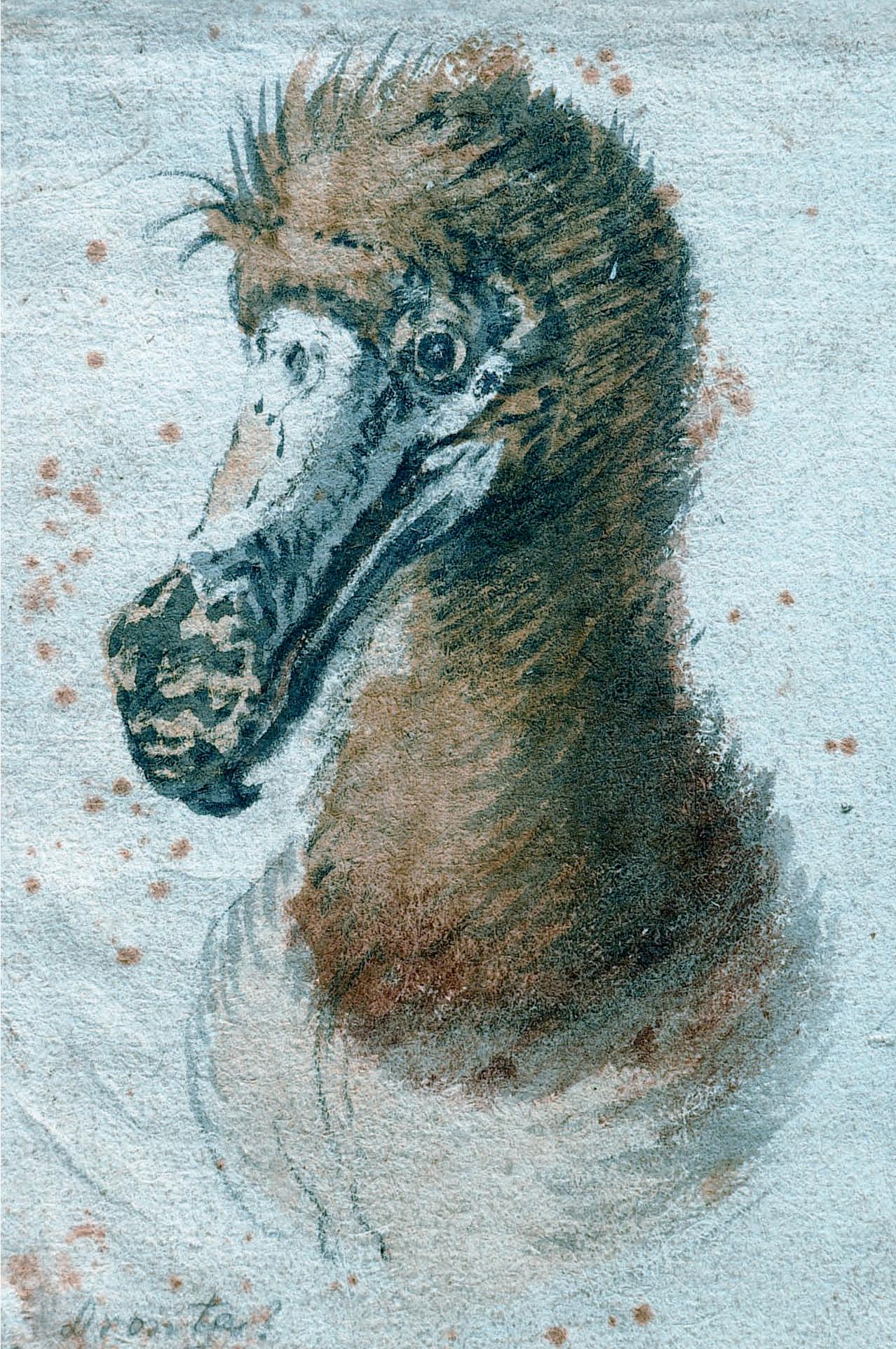 Saftleven Dodo, Mauritius, Raphus cucullatus, 1638